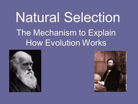 Natural Selection The Mechanism to Explain How Evolution Works.