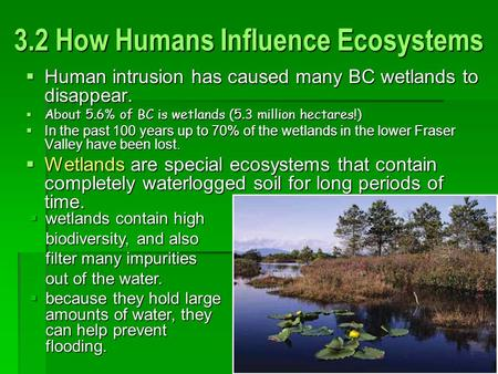 3.2 How Humans Influence Ecosystems  Human intrusion has caused many BC wetlands to disappear.  About 5.6% of BC is wetlands (5.3 million hectares!)