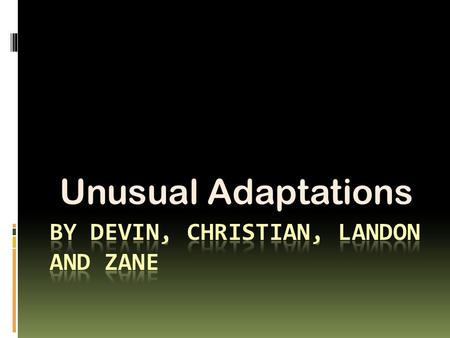 Unusual Adaptations Introduction This power point tells you many animal adaptations. Some of them include sleek bodies, skin between their arms and legs,