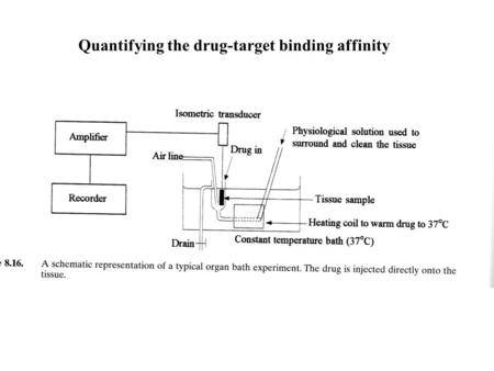 Quantifying the drug-target binding affinity. Receptors as targets (Receptors are 45% of current drug targets) Receptors are areas of proteins found in.