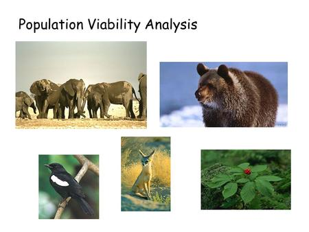 Population Viability Analysis. Critically Endangered Threatened Endangered Criterion Reduction in population size 10 yrs 3 generations >80% >50% >30%