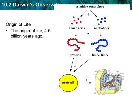 10.2 Darwin's Observations Origin of Life The origin of life, 4.6 billion years ago.