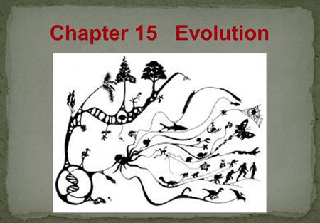 Chapter 15 Evolution Natural Selection  Individuals in a population show variations.  Variations can be inherited.  Organisms have more offspring.