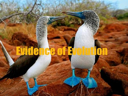 Evidence of Evolution. Target #9- I can identify the five types of evidence for evolution Evidence for evolution came through fossils, biogeography, embryology,