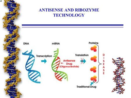 Anti-mRNA Strategies What is the antisense oligonucleotides? - Synthetic genetic material. - Interacts with natural genetic material (DNA or RNA) prevent.