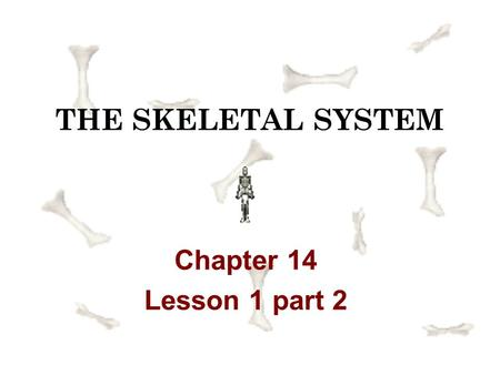 THE SKELETAL SYSTEM Chapter 14 Lesson 1 part 2 joint a connection between two or more bones or between cartilage and bone Joints provide flexibility.