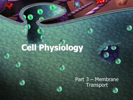 Cell Physiology Part 3 – Membrane Transport. 9-08-09 Agenda Review Membrane Potentials Membrane Transport –Passive –Active Summary of Membrane Function.