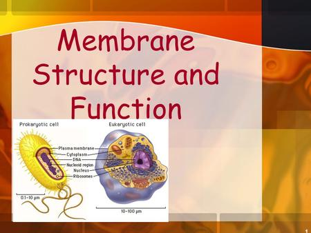 1 Membrane Structure and Function. 2 Plasma Membrane boundary Is the boundary that separates the living cell from its nonliving surroundings Selectively.