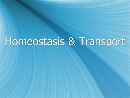 Homeostasis & Transport. Section 1: Diffusion & Osmosis.