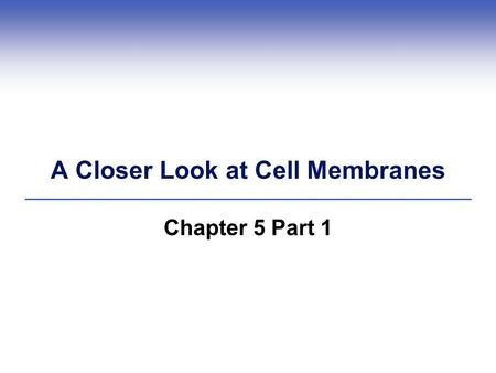 A Closer Look at Cell Membranes