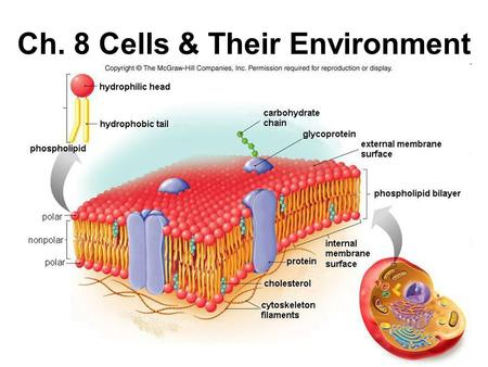 Ch. 8 Cells & Their Environment