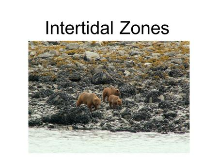 Intertidal Zones. An intertidal zone, also called the littoral zone, is the zone between mean high water and mean low water levels.