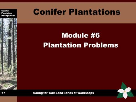 Conifer Plantation Management Caring for Your Land Series of Workshops Conifer Plantations Module #6 Plantation Problems 6-1.