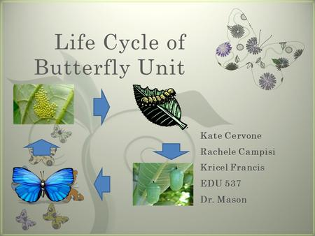 7 Life Cycle of Butterfly Unit. Rationale Essential Question.