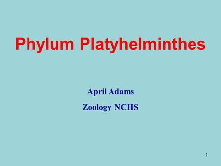 1 Phylum Platyhelminthes April Adams Zoology NCHS.