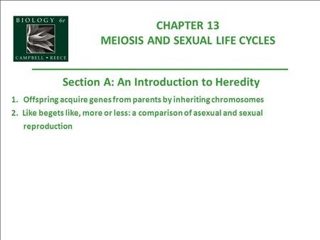 CHAPTER 13 MEIOSIS AND SEXUAL LIFE CYCLES Section A: An Introduction to Heredity 1.Offspring acquire genes from parents by inheriting chromosomes 2. Like.