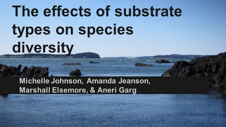 The effects of substrate types on species diversity Michelle Johnson, Amanda Jeanson, Marshall Elsemore, & Aneri Garg.
