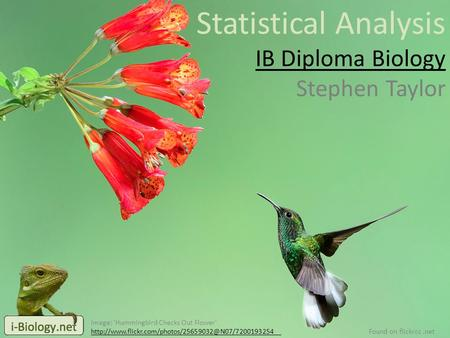 Statistical Analysis IB Diploma Biology Stephen Taylor Image: 'Hummingbird Checks Out Flower'