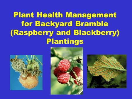 Plant Health Management for Backyard Bramble (Raspberry and Blackberry) Plantings.