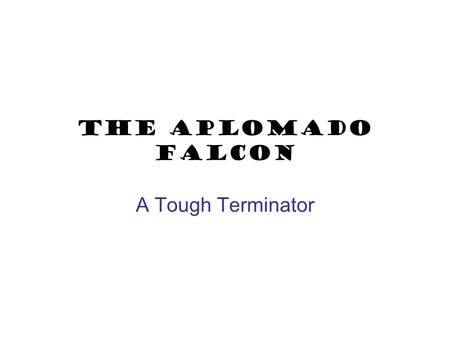 The aplomado Falcon A Tough Terminator What's in a name? NAME DERIVATION: The scientific name comes from the Latin words falco, meaning hook-shaped (falcate)