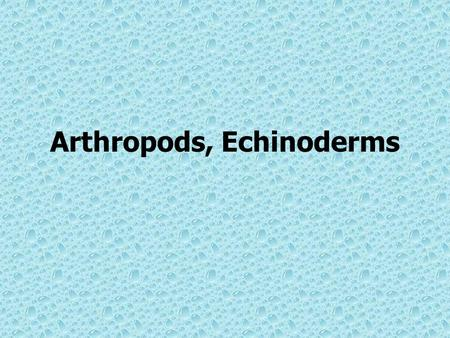 Arthropods, Echinoderms. Phylum Arthropoda Characteristics –Largest group of animals –Have jointed appendages which include legs, antennae, claws and.