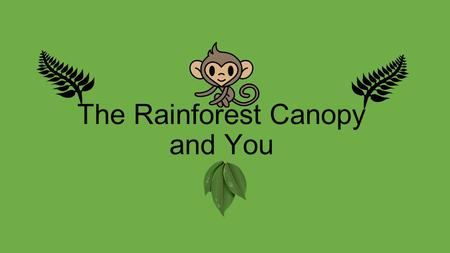 The Rainforest Canopy and You. Hi! I am Mango the Monkey and I am here to tell you all about the rainforest canopy. First, lets learn about the other.
