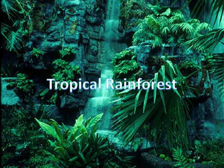 General Information Located near or along the equator Rainforests are hot year around with little temperature change. Rains more than 90 days per year.