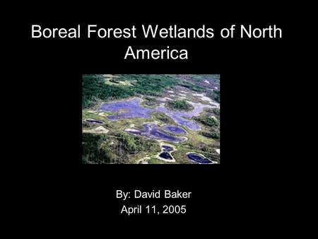 Boreal Forest Wetlands of North America By: David Baker April 11, 2005.