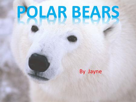 By Jayne. Polar bears do not really have any predators. Polar bears only predators are humans. Bears Polar are on the worldwide endangered list.