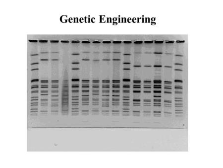 Genetic Engineering Polymerase Chain Reaction (PCR) Fig. 16.3 in text a technique for quickly cloning a particular piece of DNA in the test tube (rather.