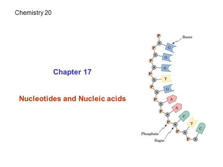Chapter 17 Nucleotides and Nucleic acids Chemistry 20.