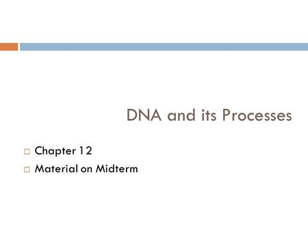 DNA and its Processes  Chapter 12  Material on Midterm.