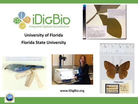 University of Florida Florida State University www.iDigBio.org.