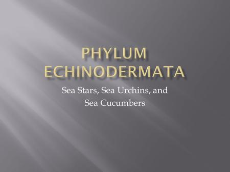 Sea Stars, Sea Urchins, and Sea Cucumbers. Echinoderm larvae are bilaterally symmetrical; adult echinoderm have pentamerous radial symmetry (symmetry.