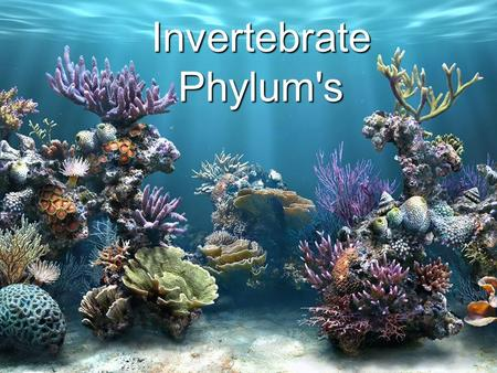 Invertebrate Phylum's. Invertebrate Basics: Animals with no backbones Multi-cellular, cells have no cell walls Most can move Most have symmetry, meaning.