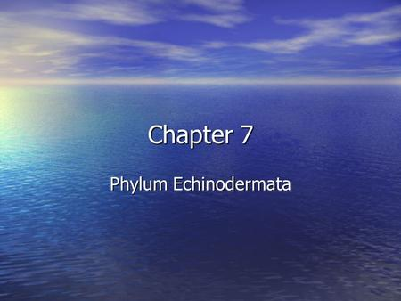 "Chapter 7 Phylum Echinodermata. Characteristics: Characteristics: –Name means ""spiny skin –Endoskeleton –Water vascular system with tube feet important."