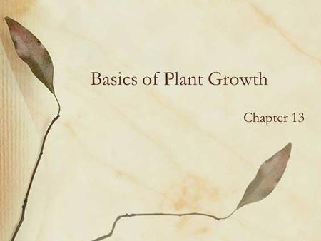 Basics of Plant Growth Chapter 13. Regions of Growth Tips of stems and roots –Terminal buds & root tips = growth in length Axils of leaves –Form new stems,