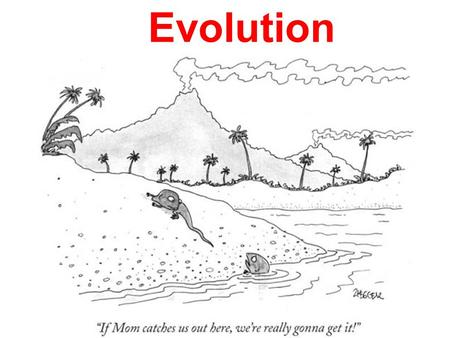 Evolution. Fixed Species Concept u The creator had designed each and every species for a particular purpose.