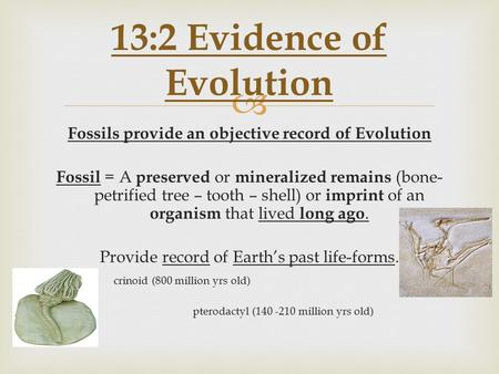  Fossils provide an objective record of Evolution Fossil = A preserved or mineralized remains (bone- petrified tree – tooth – shell) or imprint of an.