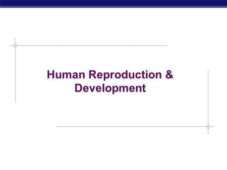 AP Biology 2005-2006 Human Reproduction & Development.
