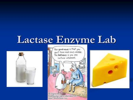 Lactase enzyme lab