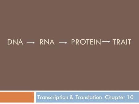 DNA RNA PROTEIN TRAIT Transcription & Translation Chapter 10.