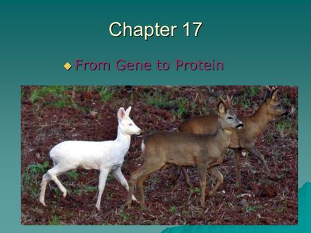 Chapter 17 From Gene to Protein.