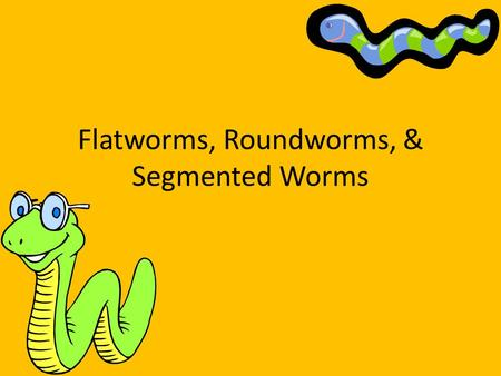 Flatworms, Roundworms, & Segmented Worms. Phylum Platyhelminthes Flatworms Flat and thin bodies Bilateral symmetry Most are parasitic.
