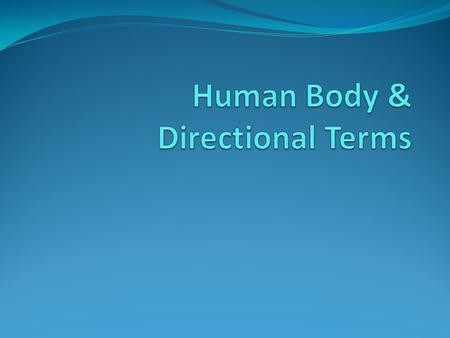 Human Body & Directional Terms