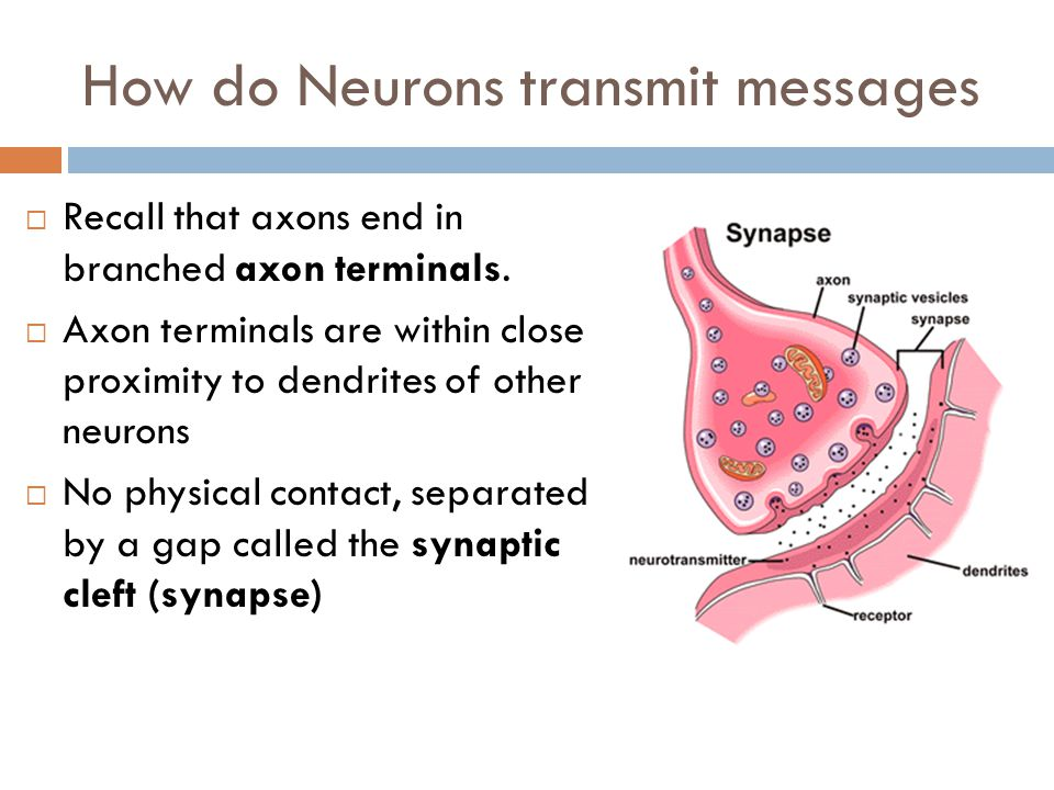 Learning Goals  How do neurons send messages amongst each other  Learn a few of the primary neurotransmitters