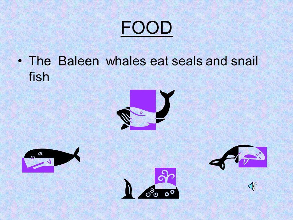Enemies The Baleen whales enemies are…seals