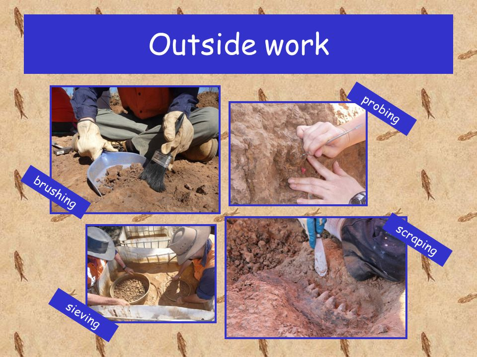 Outside work We measure the dig site and take photos to record the position of the fossils.