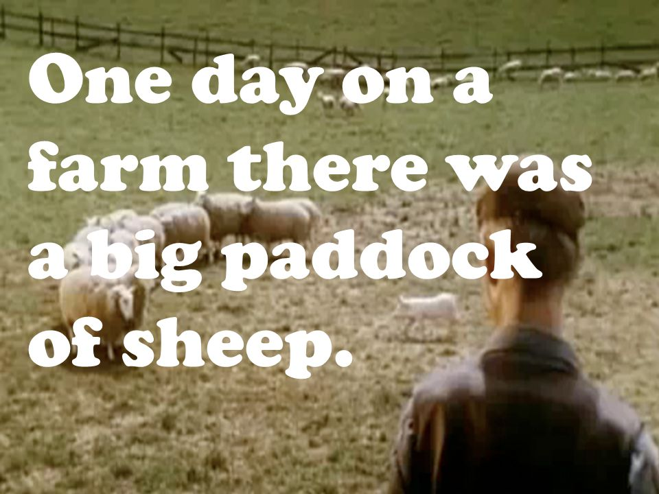 One day on a farm there was a big paddock of sheep.