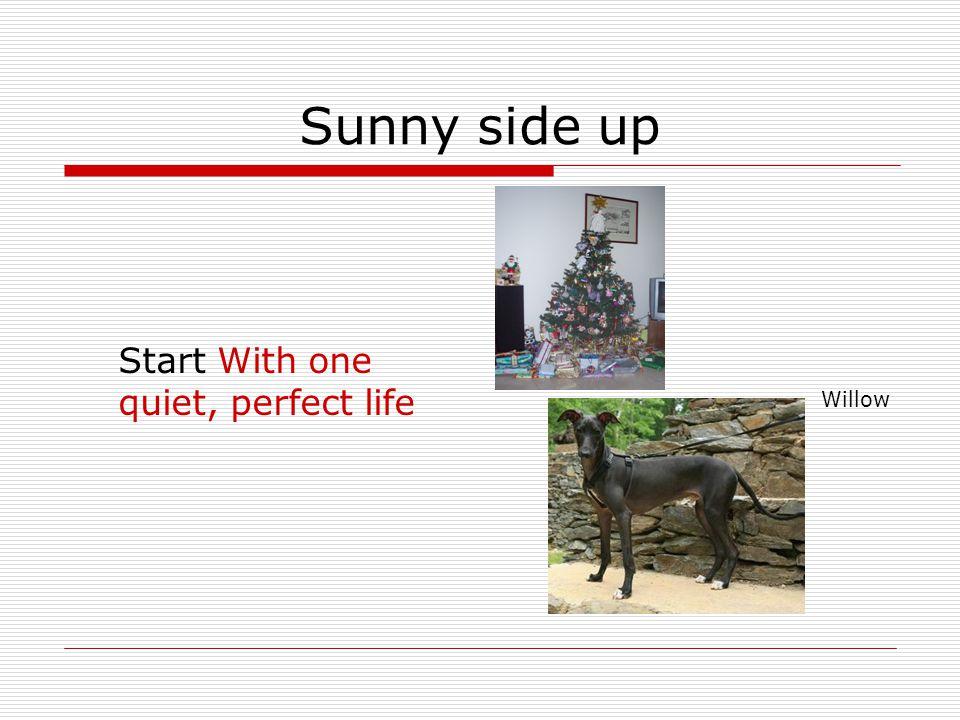 Sunny side up Add: 1 step-dad (Carl) 2 precooked siblings (Lyall & Saskia) Boris